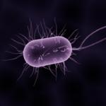 Salmonella: la contaminazione batterica più diffusa negli alimenti